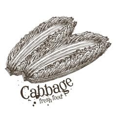 Ripe cabbage logo design template fresh vector