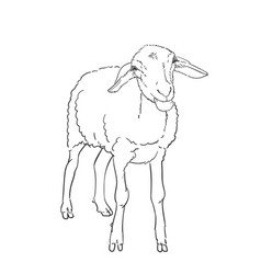 Sheep drawing farm animal stands on its vector