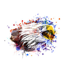 color an eagle head vector image