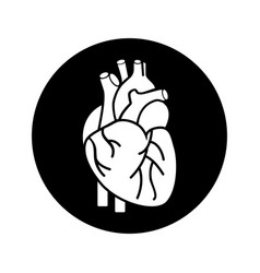 heart organ human icon vector image
