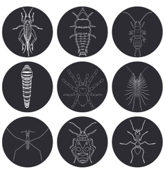 insect icons set Earwig and trilobite beetle vector image