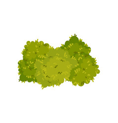Bushes are located close to each other vector