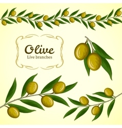 Collection olive branch green olives vector