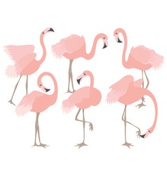 Coral Flamingo Set vector