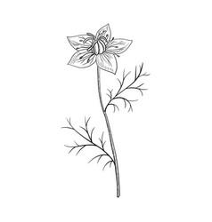 Drawing nigella vector