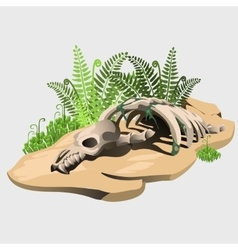 Fossil skeleton of an ancient animal on stone vector image vector image