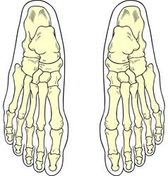 Foot bones vector image