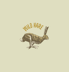 wild hare or rabbit engraved hand drawn in old vector image