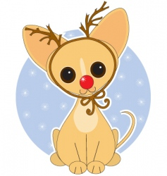 chihuahua rudolf vector image