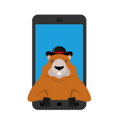 groundhog day marmotin phone woodchuck in gadget vector image