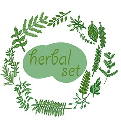 Herbal set hand drawn vector