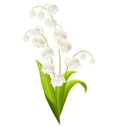 Lily of the valley isolated vector