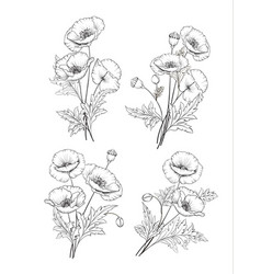 vintage poppy set vector image