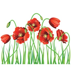 Poppy with Grass vector image