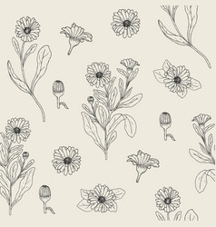 botanical seamless pattern with blooming calendula vector image vector image