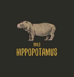 wild hippopotamus engraved hand drawn in old vector image