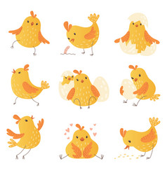 cartoon chicken egg cute yellow little farm birds vector image
