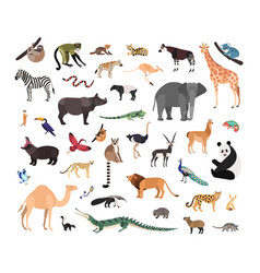 Collection of exotic wild animals isolated vector