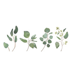 Eucalyptus seeded silver tree leaves branches set vector