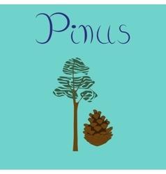 flat stylish background plant Pinus vector image