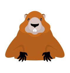 Groundhog marmot portrait isolated wild rodent vector