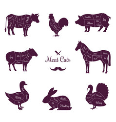 meat cuts poster with named animals body parts vector image