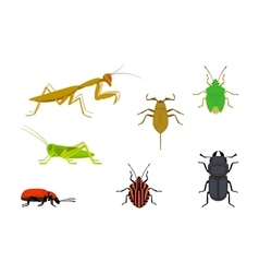 Set of european insects vector