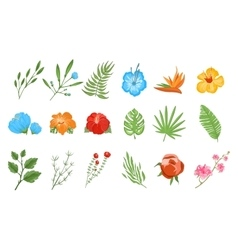 Traditional and tropical flowers vector