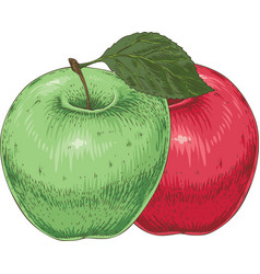 ripe green and red apples vector image