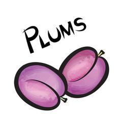 Plums sign isolated plum fruit tag fresh farm vector