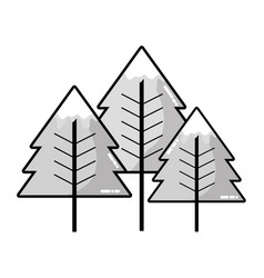 grayscale beauty natural pine tree design vector image vector image