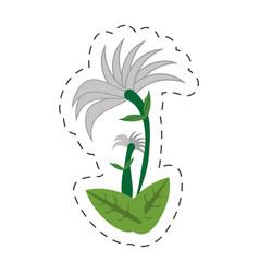 cartoon chrysanthemum flower image vector image vector image