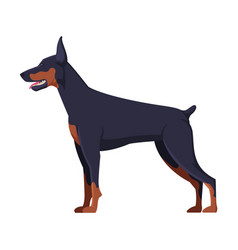 doberman purebred dog pet animal side view vector image