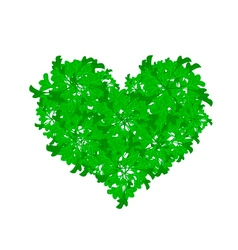 Fresh parsley leaves forming in beutiful heart sha vector