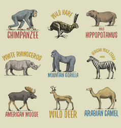 wild gorilla moose or eurasian elk camel and vector image