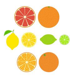 collection of citrus slices of orange lemon lime vector image