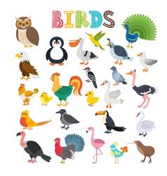 different kind of birds Cute cartoon birds vector image