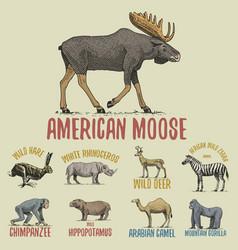 Wild gorilla moose or eurasian elk camel and vector