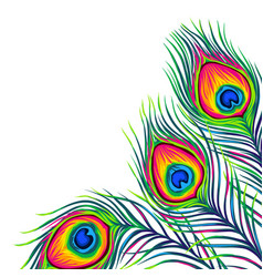 background with peacock feathers vector image