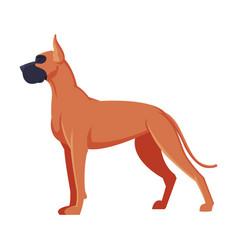 Great dane boxer purebred dog pet animal side vector