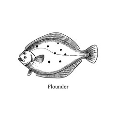 hand drawn sketch fish flounder black and white vector image