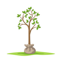 Young tree in the bale vector