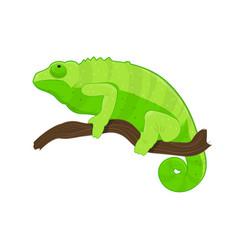 green chameleon on branch vector image