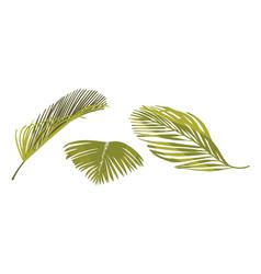 coconut palm leaves graphic design elements vector image