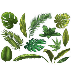 green tropical leaves hand drawn rainforest vector image
