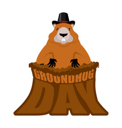 Groundhog day marmot in hat rodent aristocrat for vector