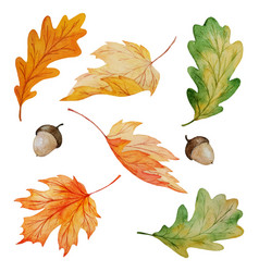 maple and oak leaves collection vector image