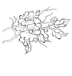 blossoming branch of an apple-tree vector image