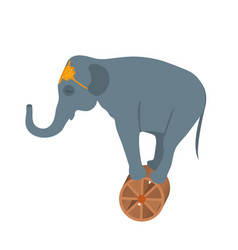 circus elephant on the wheel icon style flat vector image