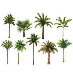 colourful hand drawn palm tree retro tropical vector image